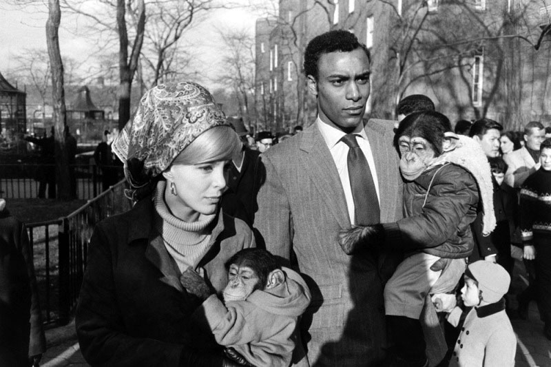GARRY WINOGRAND :: Central Park Zoo, NYC, 1964